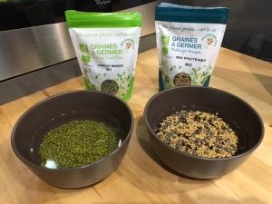 présentation d'un côté des graines de haricots mungo et de l'autre du mix protéiné de germline, les graines c'est la vie pour commencer le procesus de germination
